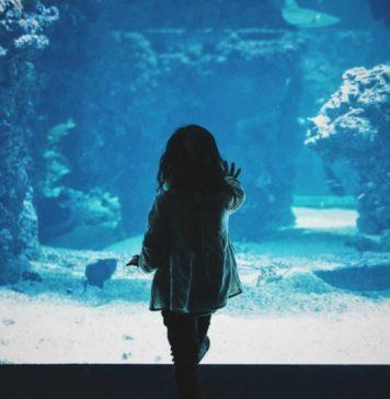 Attractions for children in Tenerife